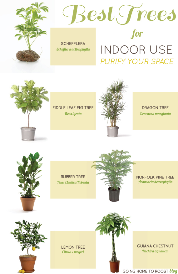 best-indoor-trees