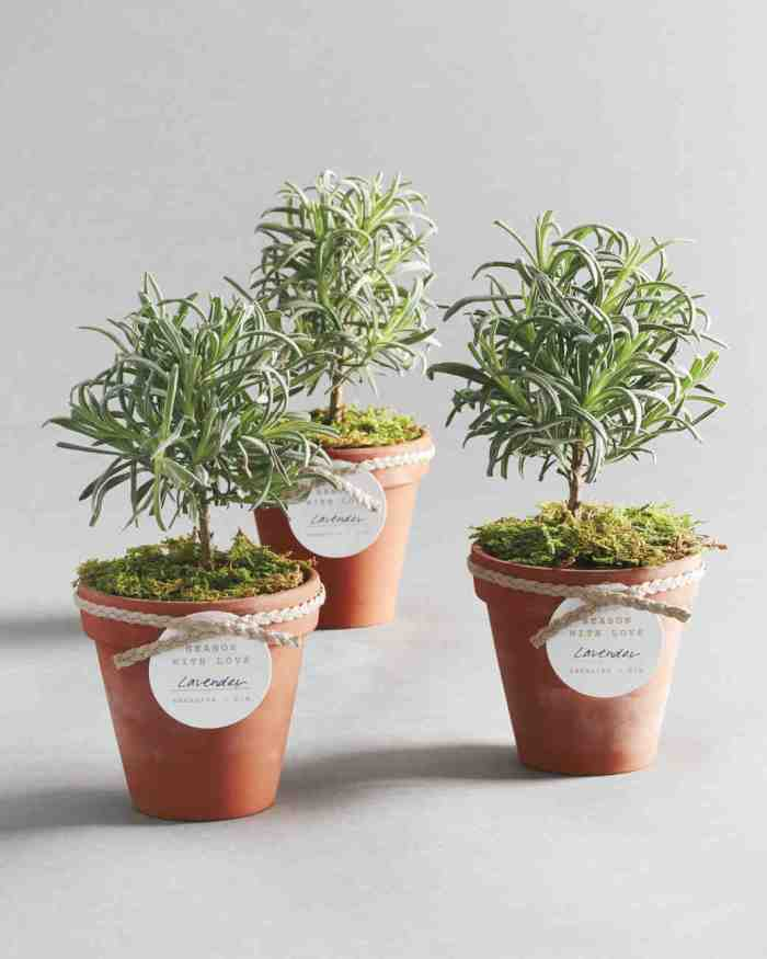 herb-potted-plants-centerpieces-for-tu-bshevat